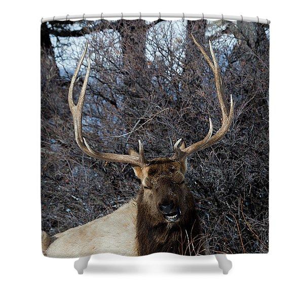 Wyoming Elk Shower Curtain