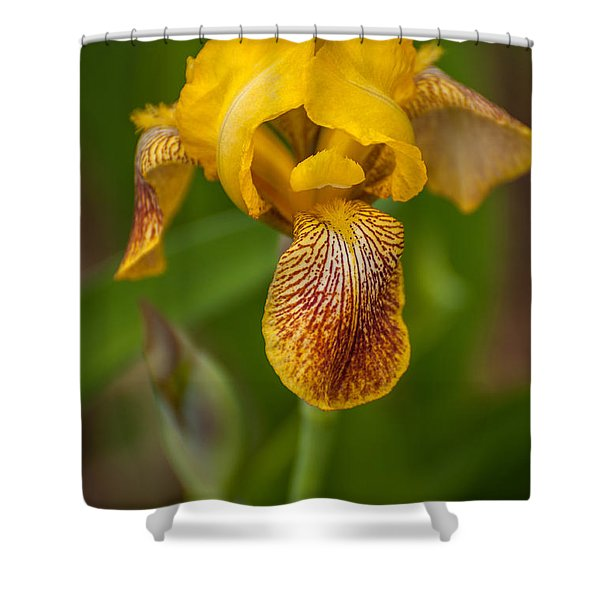 Yellow Bearded Iris Shower Curtain