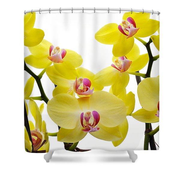 Yellow Beauties Shower Curtain