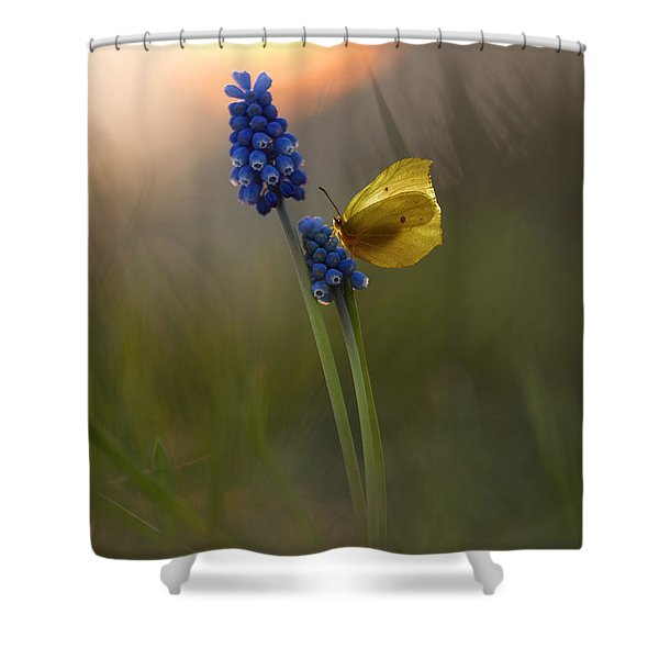 Shower Curtain featuring the photograph Yellow Butterfly On Grape Hyacinths by Jaroslaw Blaminsky