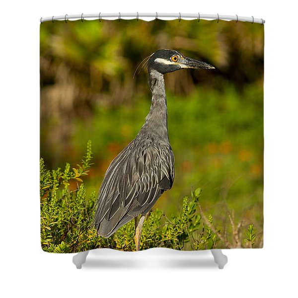 Yellow Crowned Night Heron Dune Watch Shower Curtain