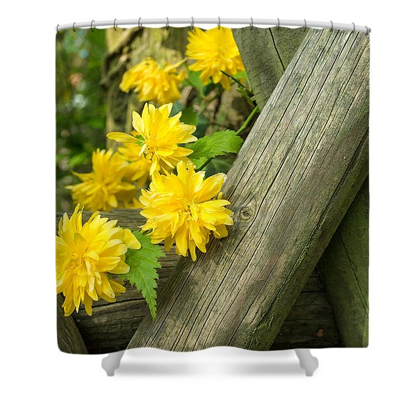 Yellow Flowers And Fence Shower Curtain