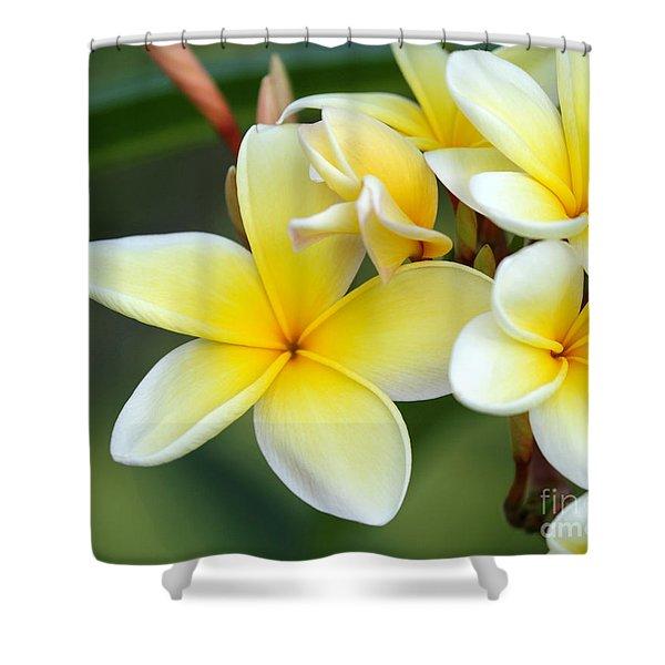 Yellow Frangipani Flowers Shower Curtain
