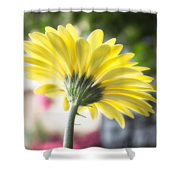 Yellow Gerbera Shower Curtain