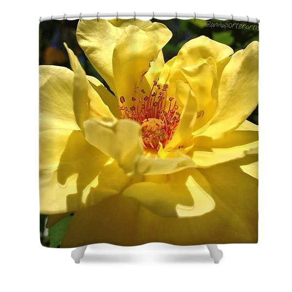 Yellow Monday Rose Shower Curtain