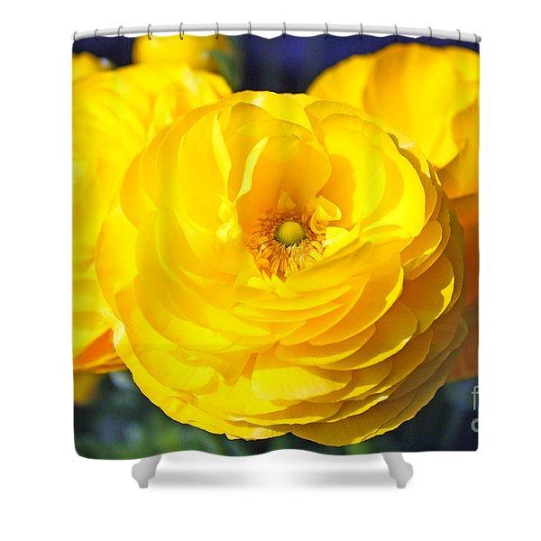 Yellow Peonies Shower Curtain