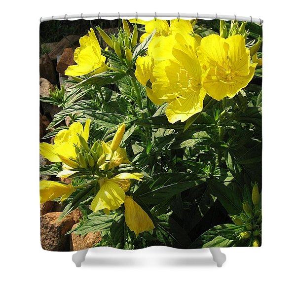 Yellow Primroses Shower Curtain