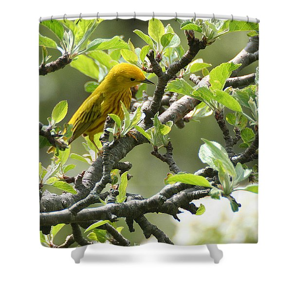 Yellow Warbler In Pear Tree Shower Curtain