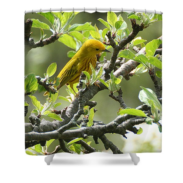 Shower Curtain featuring the photograph Yellow Warbler In Pear Tree by William Selander