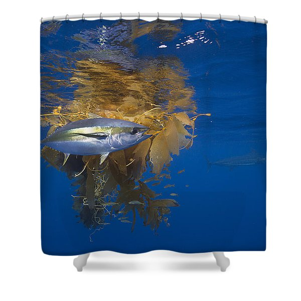 Yellowfin Tuna And Kelp Nine-mile Bank Shower Curtain