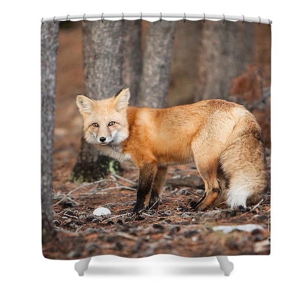 You Caught Me Shower Curtain