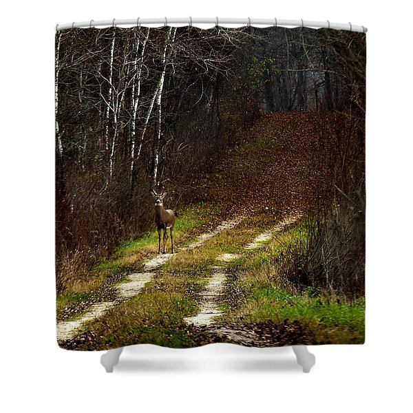 Young Buck And Autumn Shower Curtain