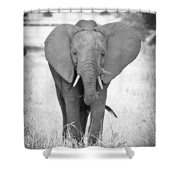 Young Bull Elephant Shower Curtain