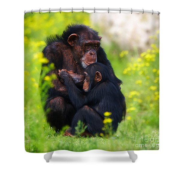 Young Chimpanzee With Adult - II Shower Curtain
