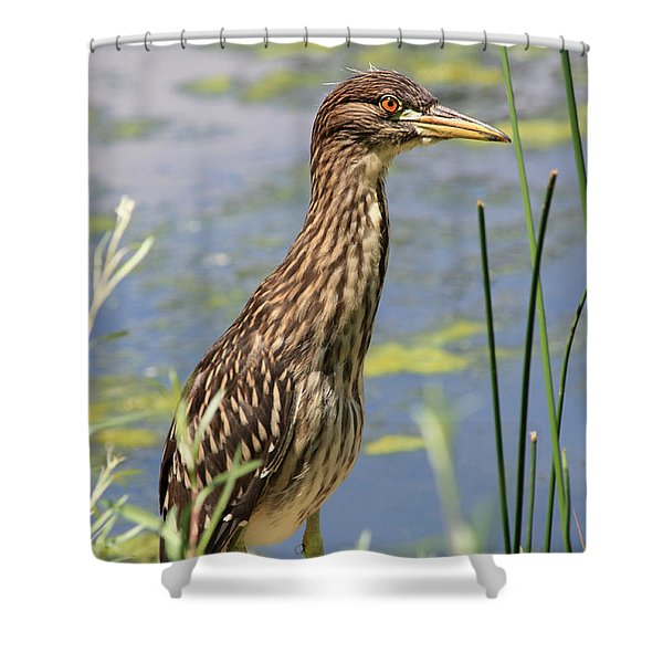 Young Heron Shower Curtain