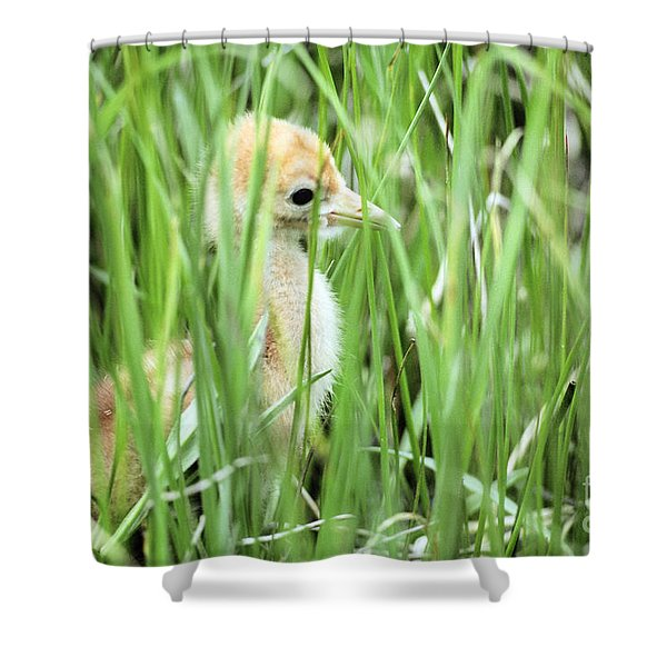 Young Whooping Crane Shower Curtain