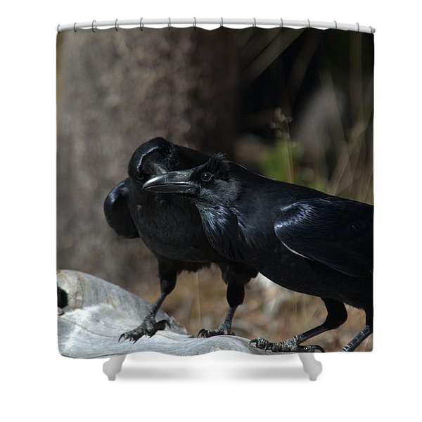 You've Got Something On Your Beak Shower Curtain