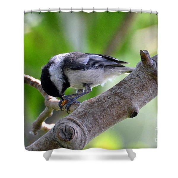 Yumyum Shower Curtain
