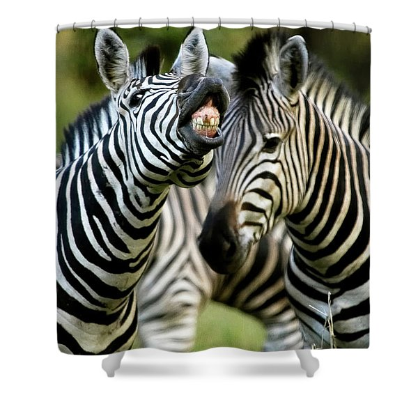 Zebra Showing Its Teeth, Equus Quagga Shower Curtain