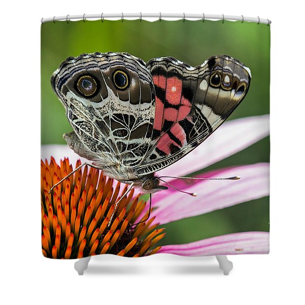 Butterfly Feeding Shower Curtain