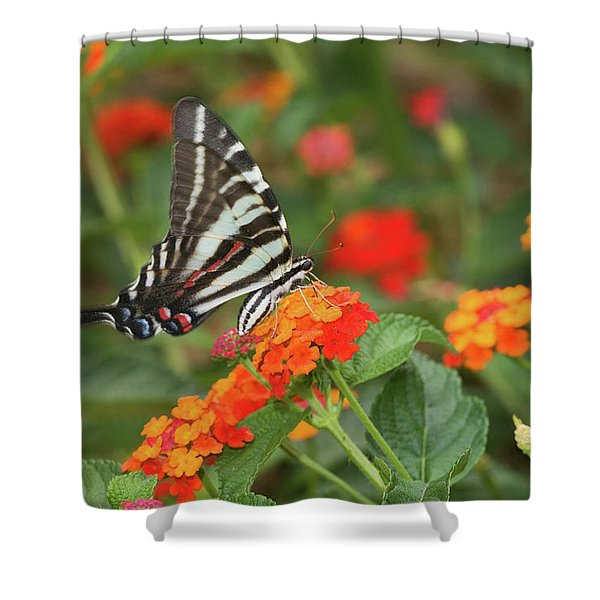 Zebra Swallowtail Eurytides Marcellus Shower Curtain
