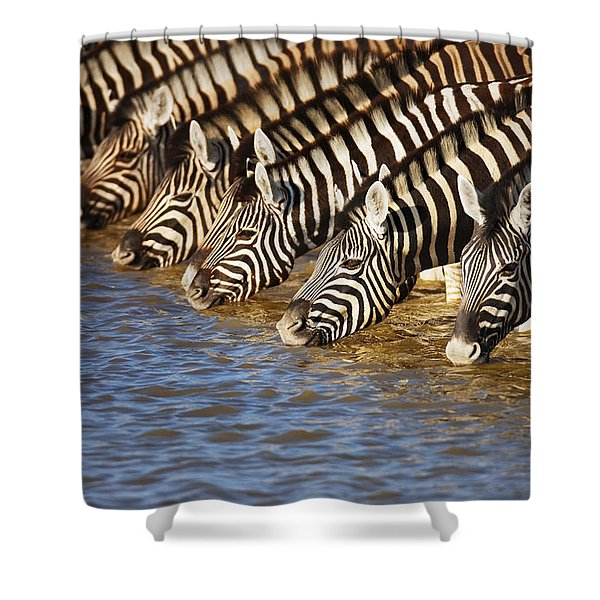 Zebras Drinking Shower Curtain