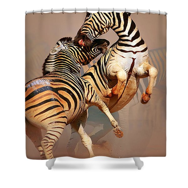 Zebras Fighting Shower Curtain