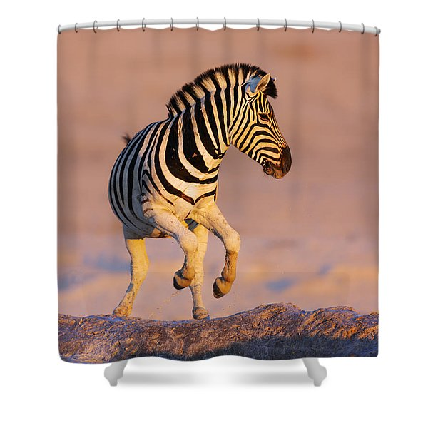 Zebras Jump From Waterhole Shower Curtain