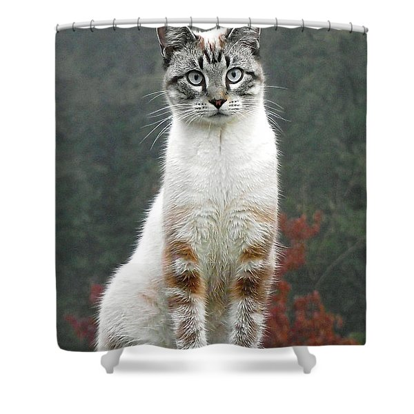 Zing The Cat Shower Curtain