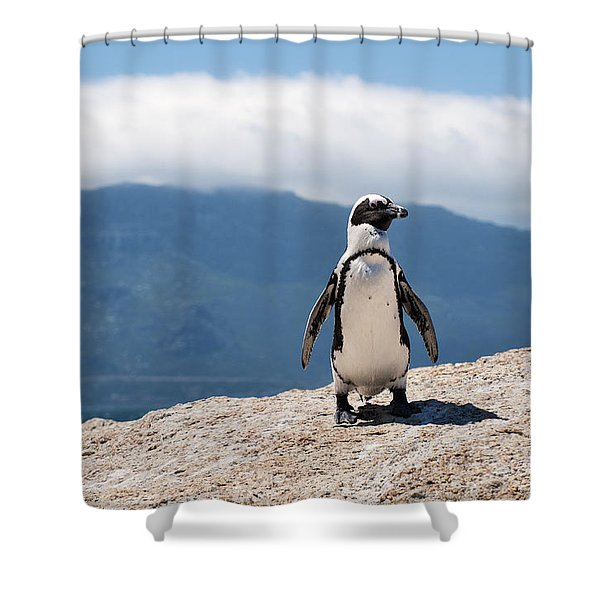 African Penguin Shower Curtain
