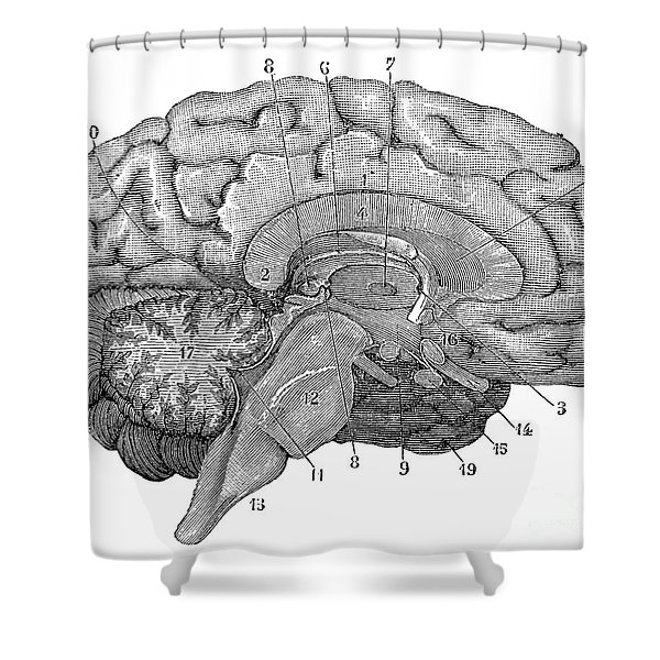 Brain Cross-section Shower Curtain