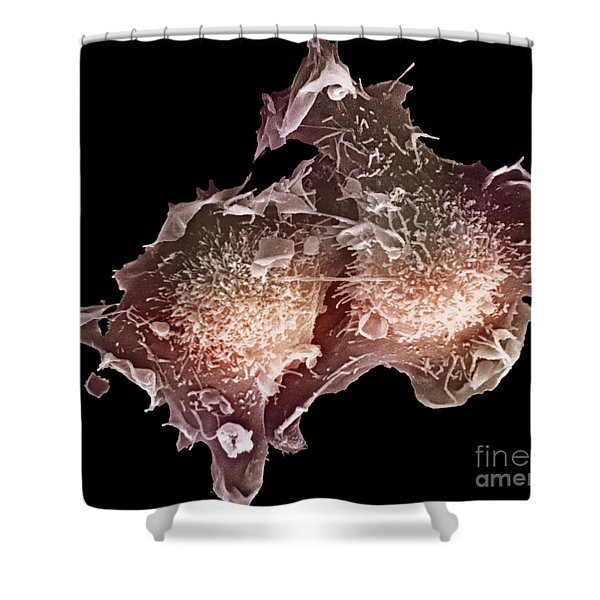 Cell Culture Shower Curtain