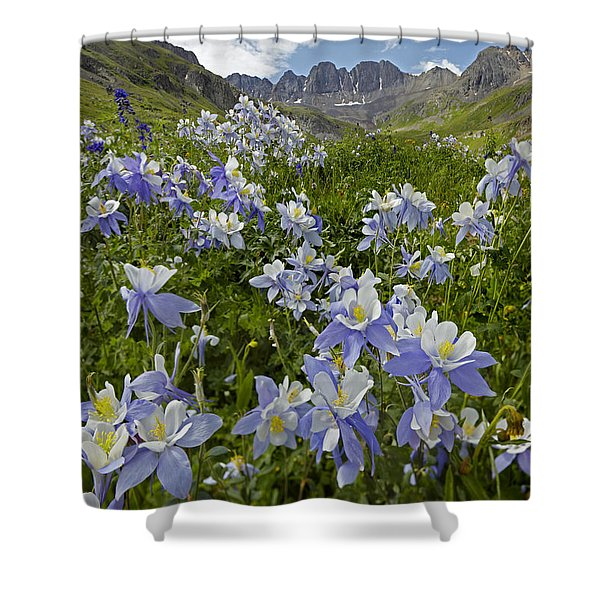 Colorado Blue Columbine Flowers Shower Curtain