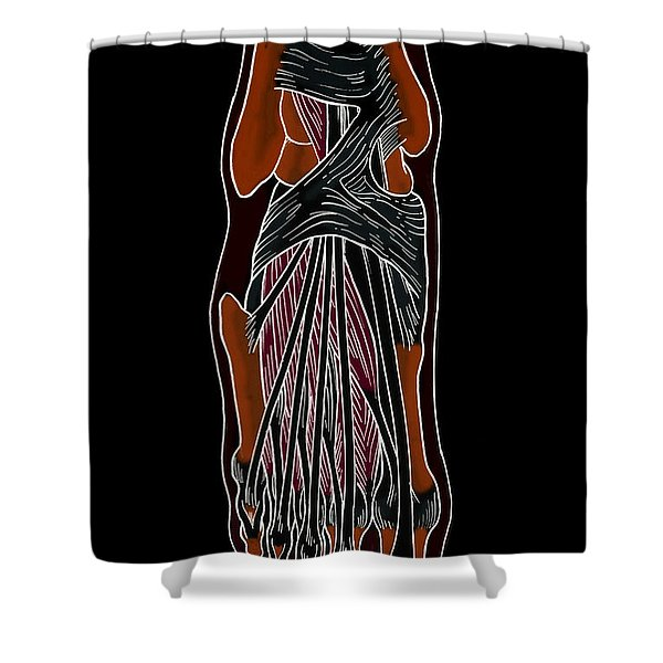 Illustration Of Foot Anatomy Shower Curtain
