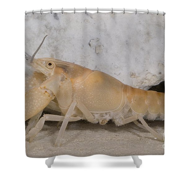 Miami Cave Crayfish Shower Curtain