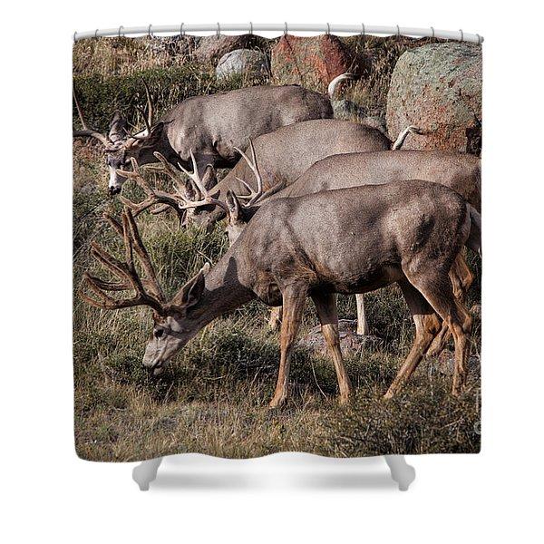 Mule Deer Bucks Shower Curtain