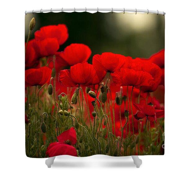Poppy Flowers 05 Shower Curtain