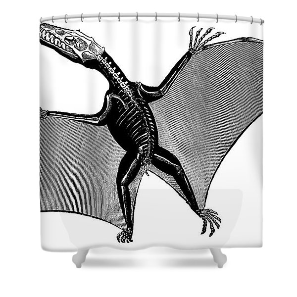 Pterodactyl, Extinct Flying Reptile Shower Curtain