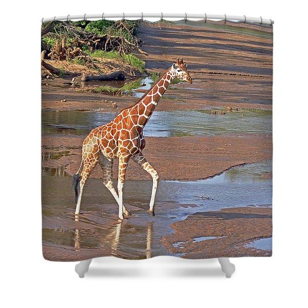 Reticulated Giraffe Shower Curtain