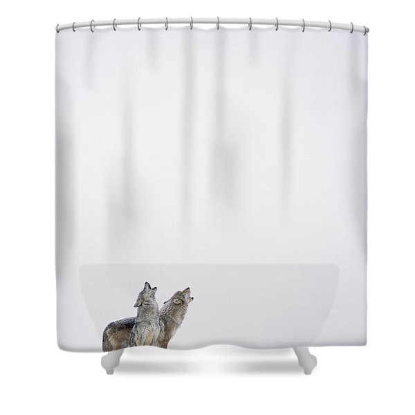 Timber Wolf Pair Howling In Snow North Shower Curtain