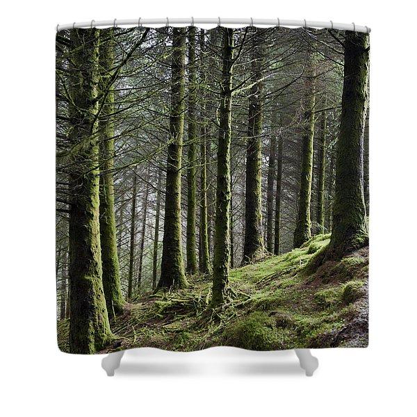 Tree Trunks Shower Curtain