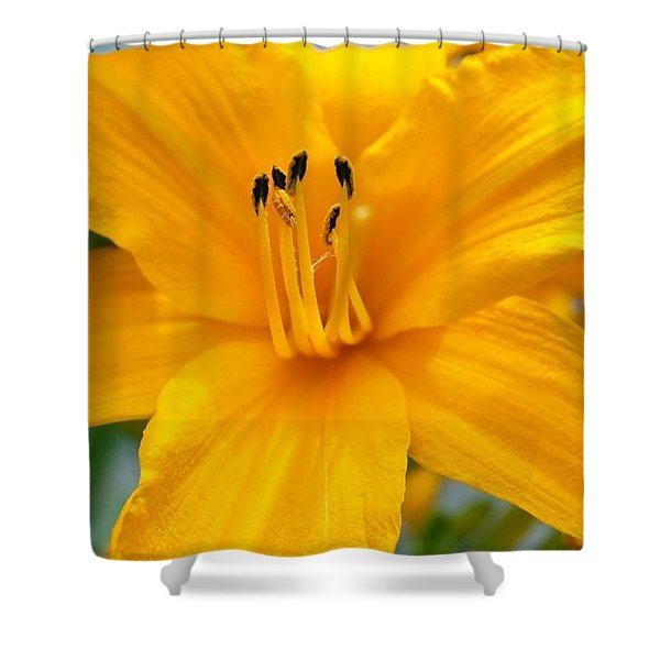 Lilly Up Shower Curtain