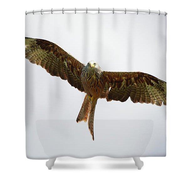 Red Kite In Flight Shower Curtain