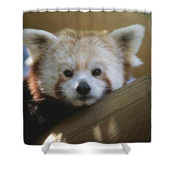 Close View Of A Red Panda Shower Curtain
