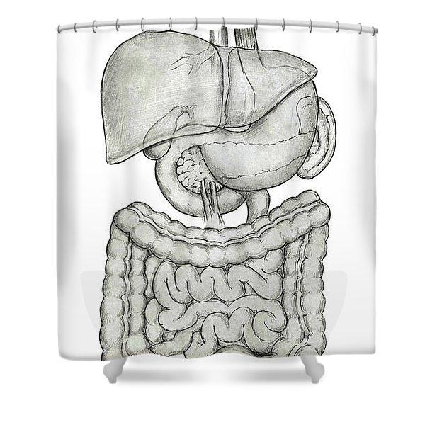 Digestive System Shower Curtain