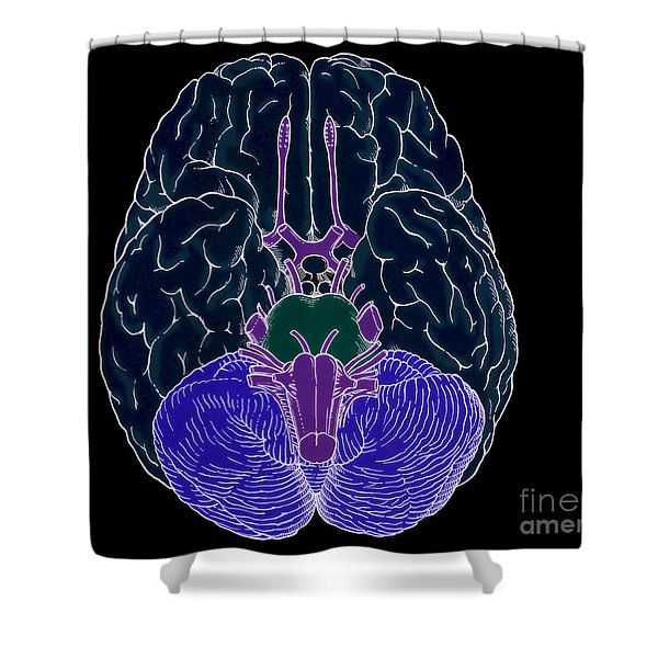 Illustration Of Cranial Nerves Shower Curtain