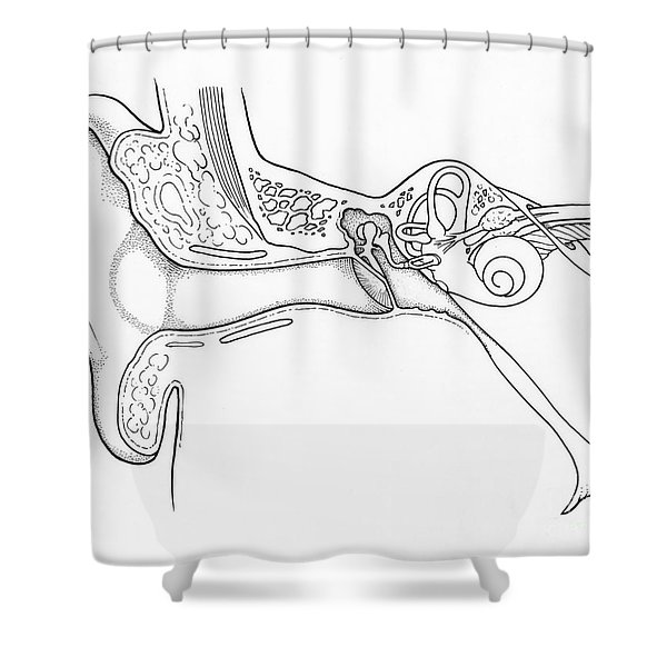 Illustration Of Ear Anatomy Shower Curtain