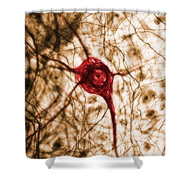 Neuron, Tem Shower Curtain