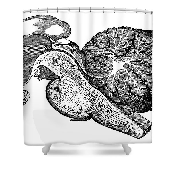 Third And Fourth Ventricles Of The Brain Shower Curtain