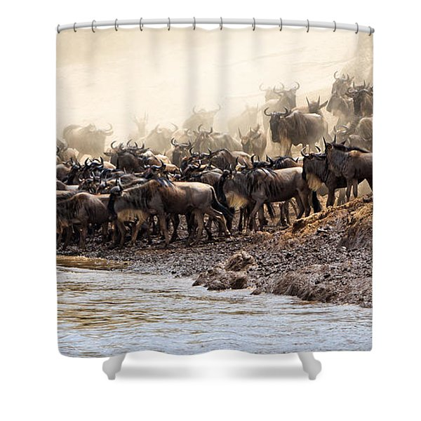 Shower Curtain featuring the photograph Wildebeest Before The Crossing by Perla Copernik